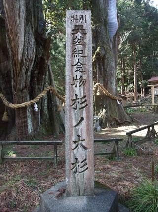 杉の大杉 6