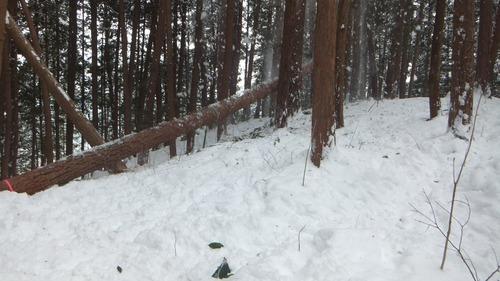 伐採実習24