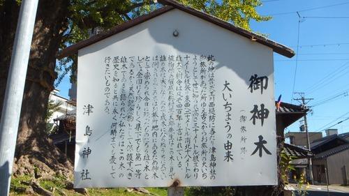 津島神社御旅所の銀杏 1