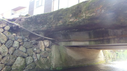 木の根橋4