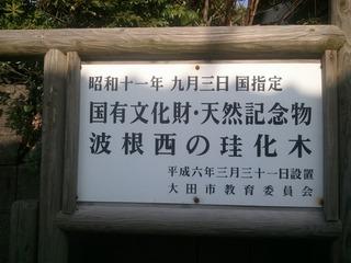 島根県波根西の珪化木 1