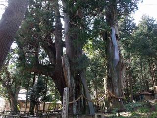 杉の大杉 3