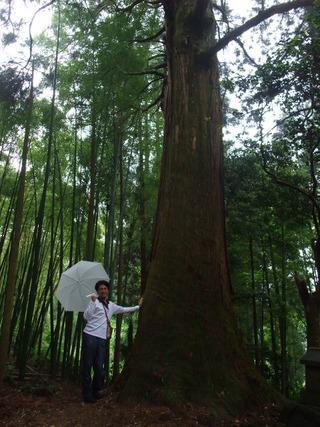 大杵社の大杉 4