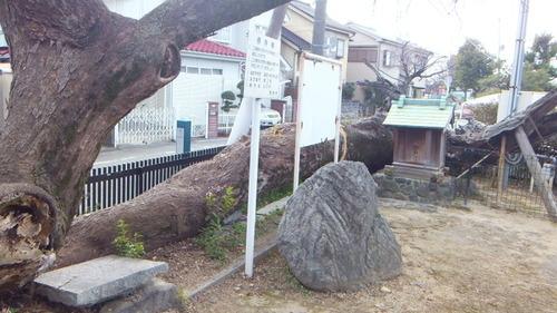 太田不動尊のムクノキ 4