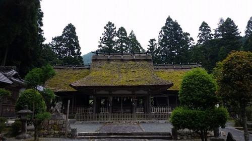 胎金寺山口の天狗杉10
