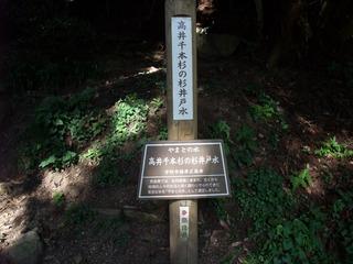 高井の千本杉 4