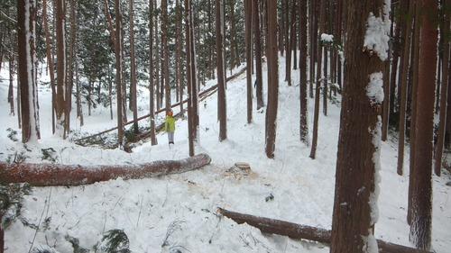 伐採実習25
