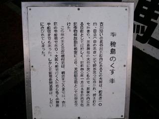 稗島のくす 1