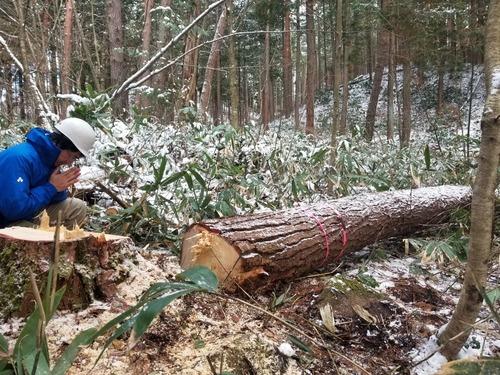 伐採授業6