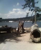 風倒木、双龍の松