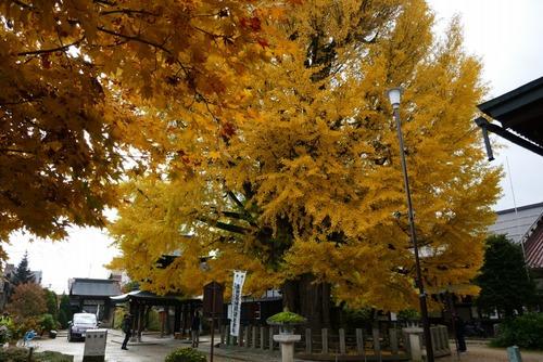 飛騨国分寺の大イチョウ1
