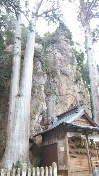 巌石神社の夫婦ヒノキ 9