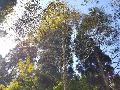 渓谷の天然林2