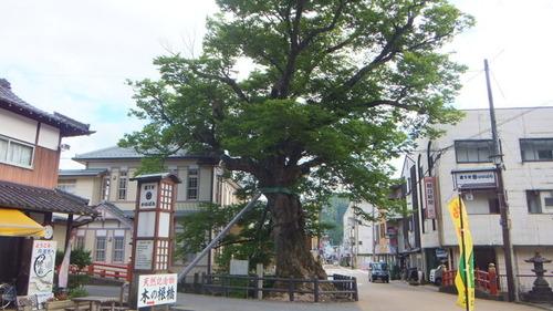木の根橋3