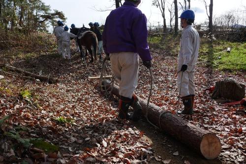 戸田先生と愉快な仲間たちの伐採授業 2019年度 5