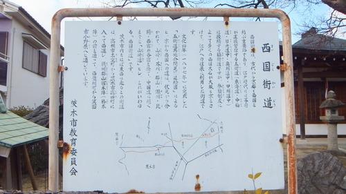 太田不動尊のムクノキ 1