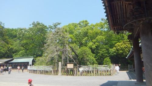 三嶋大社の金木犀 8