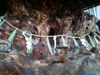 巨樹の根 2