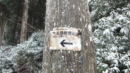 常瀧寺の大公孫樹2