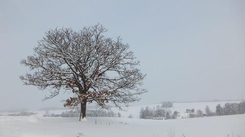 セブンスターの木 4