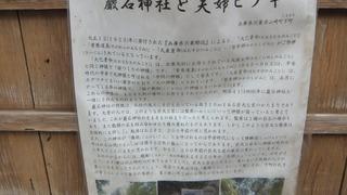 巌石神社の夫婦ヒノキ 4