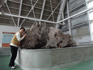 埋没林博物館12