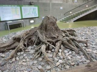 埋没林博物館8