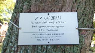京大探訪木 2