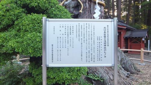 北口本宮さんの森 8