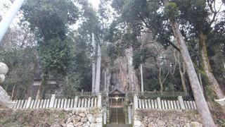 巌石神社の夫婦ヒノキ 3