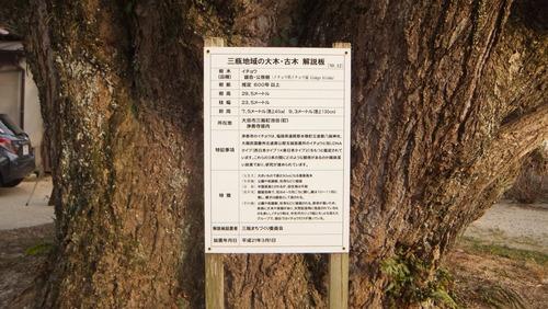 浄善寺の銀杏 1