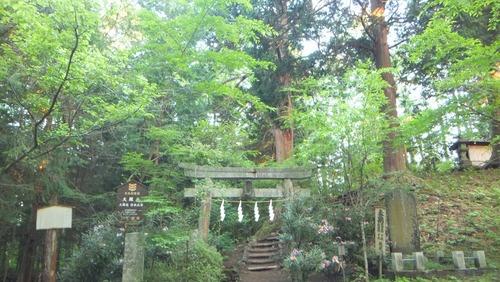 大塚丘のヒノキ 2