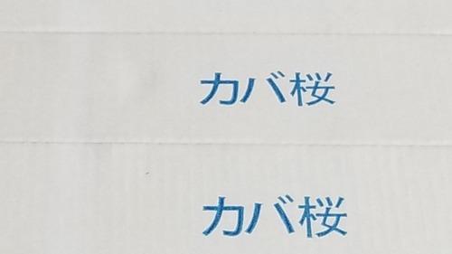 カバ桜フローリング1