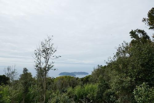 諭鶴羽神社の親子杉とアカガシ群落11