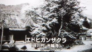 守られる木 2