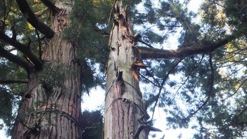 北口本宮さんの森 12