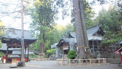 北口本宮さんの森 11