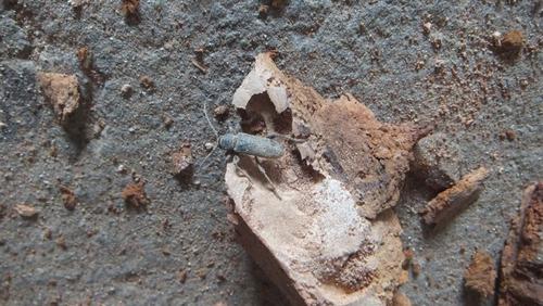 本物の木の虫 6