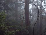 41霧の中の小杉
