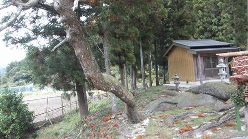 夏山の大杉 3