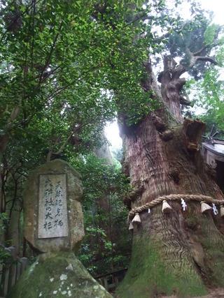 大杵社の大杉 12