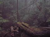 42小杉を育む森