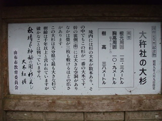 大杵社の大杉 1