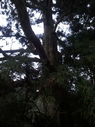 流谷八幡神社 20