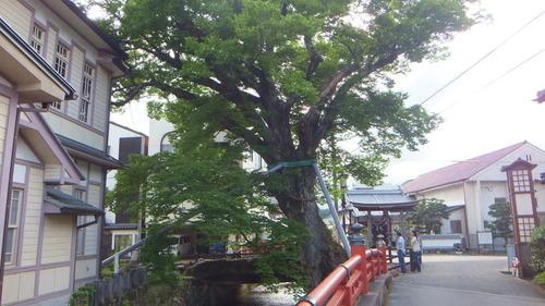 木の根橋6