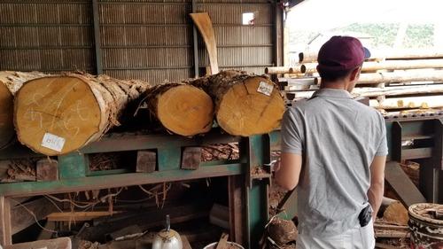 材木屋と行く森林ツアー2019-8