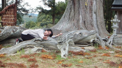 夏山の大杉 9