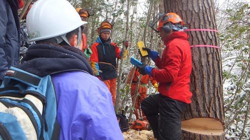 伐採授業12