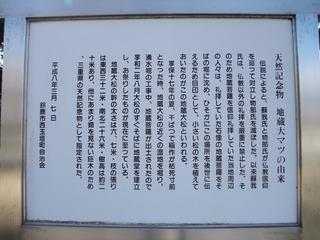 地蔵大松 1