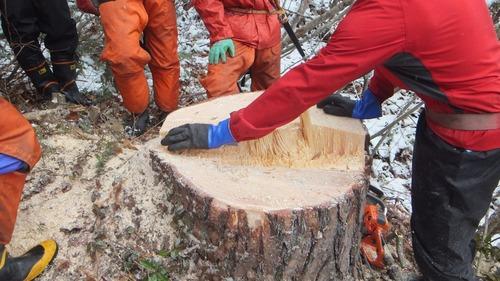 伐採授業13